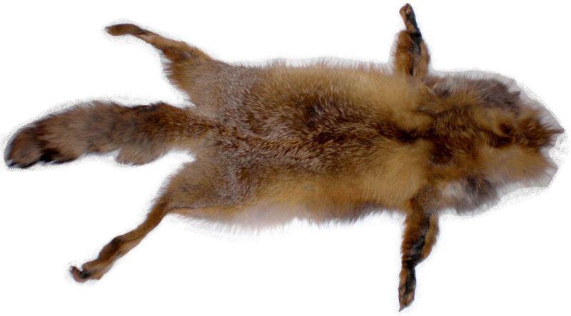Мех рыжая лиса 4